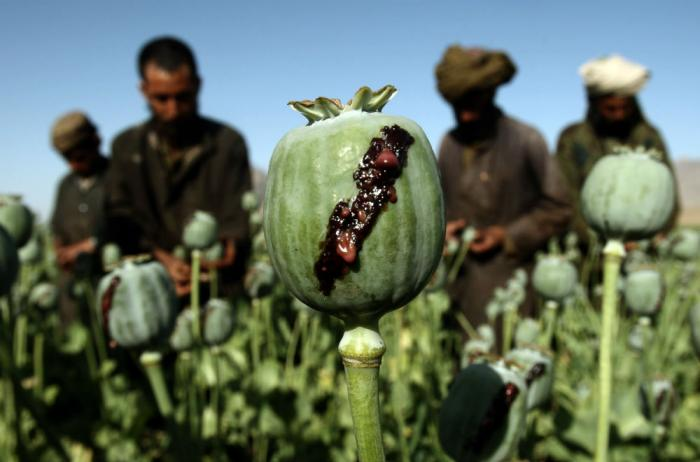 Afghanistan accounted for 80 percent of opium poppy cultivation in 2014. [Photo: Reuters/Goran Tomas