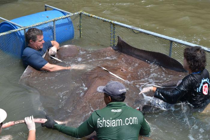 Sea monster massive 14 foot stingray declared world 39 s for Fish therapy near me